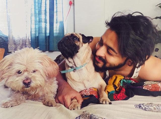 Sourav Das pate Dogs