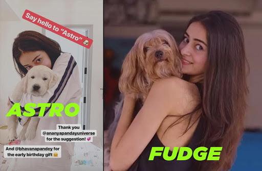 Ananya Pandey pet dogs