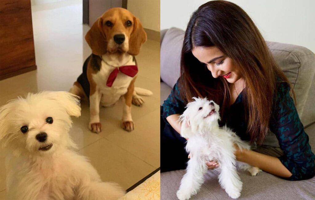 jasmin bhasin dogs mia and rambo